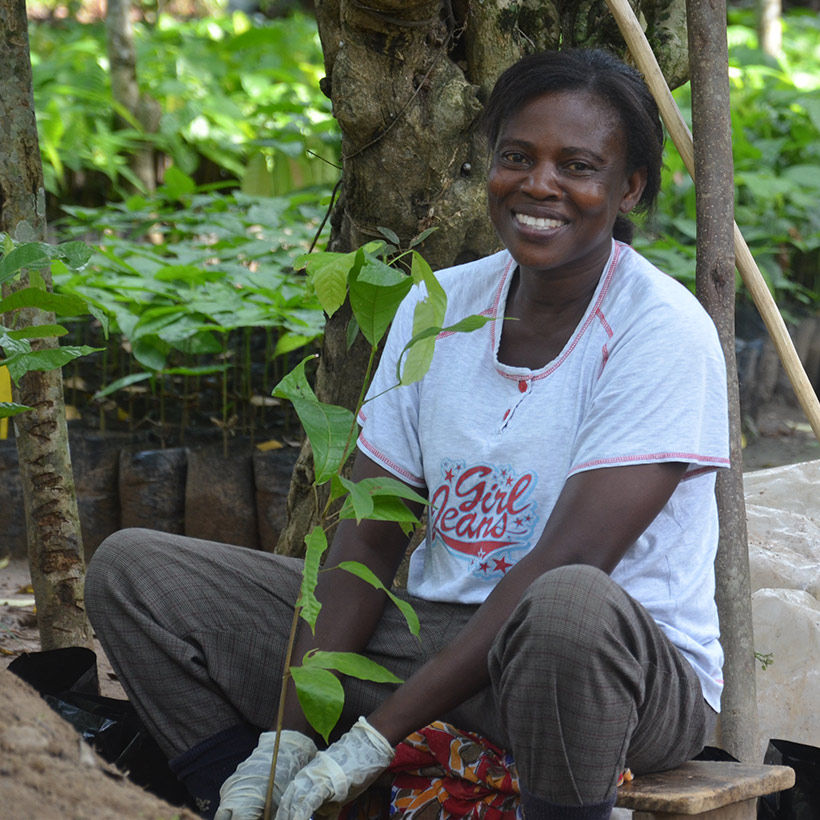 how to grow cocoa plants