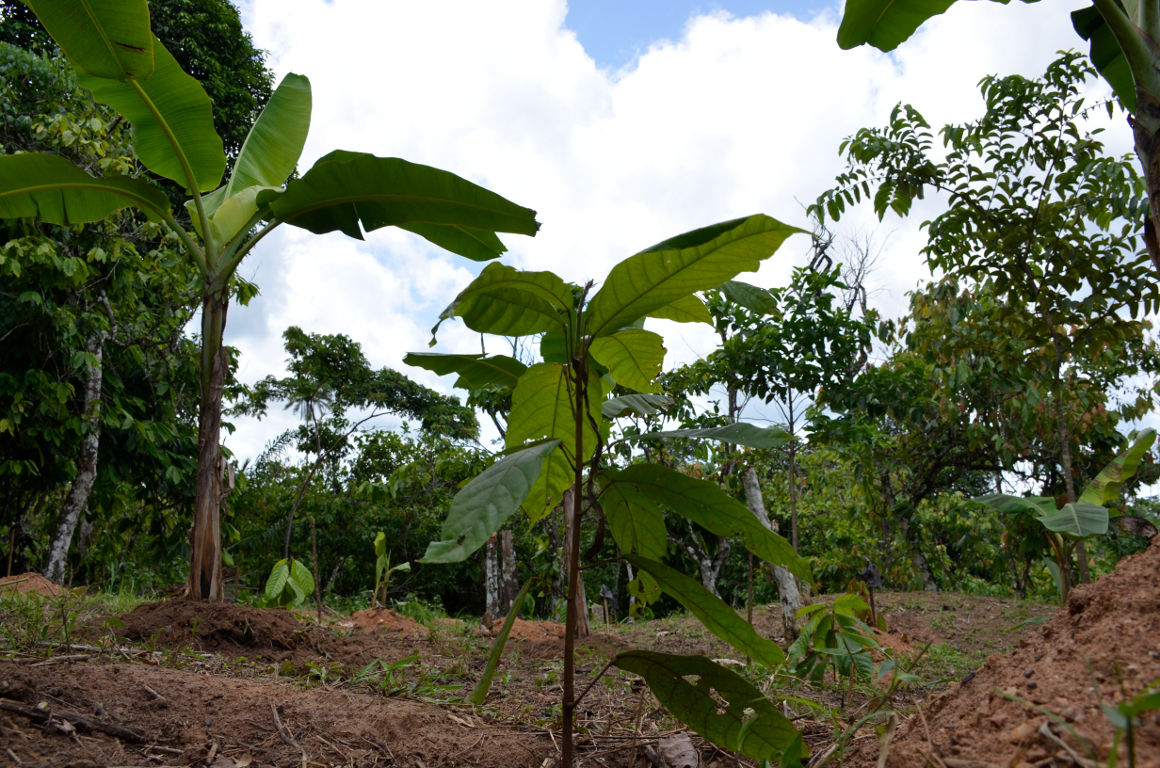 Cocoa Life - Protecting Forests and Combating Climate Change